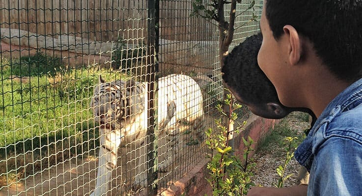 Metadrasi - IMG 6645 zoo