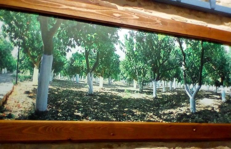Metadrasi - school chios kambos citrus