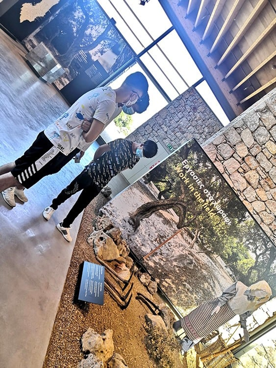 Metadrasi - metadrasi chios mastic museum 2